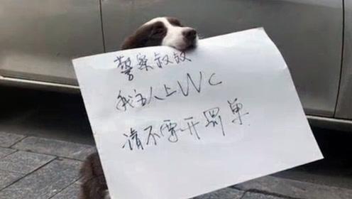 狗狗:我为这个家付出了太多,我真的太难了!