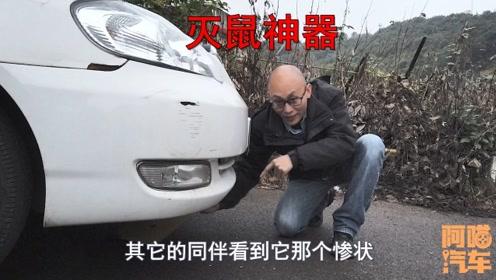 车内进了老鼠怎么办?老司机试验了多种办法,还是这个办法管用