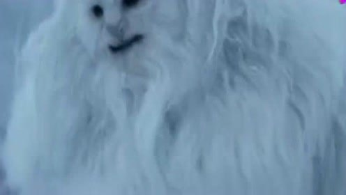 雇佣兵雪山猎杀千年雪怪,不料雪怪威猛无比,一掌将敌人霸气反杀!