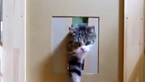 喵星人到底是什么物种?猫:前面6厘米是给你面子!