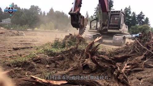 """美国发明""""树根克星""""机械,30秒树根变碎木,百年树根也要认怂"""