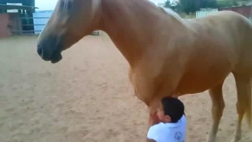 小男孩一出生,富豪爸爸就为他养了一匹马,真是人比人气死人啊