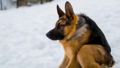雪地发现一只奇异狗狗,被冷的缩脖子?真实原因让人心痛