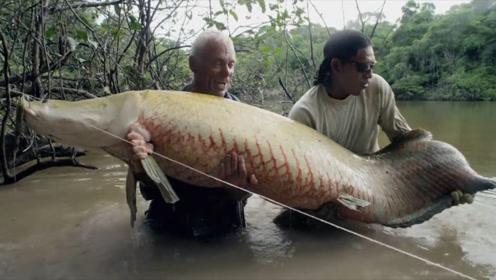 世界上最笨的鱼,每只体型200多斤,能活1亿年!?