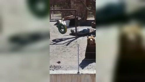 战斗民族熊成精!动物园棕熊竟学会向游客挥手致意