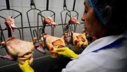 世界三大珍馐之一的鹅肝,生产过程却极其残忍,了解后你还敢吃吗?