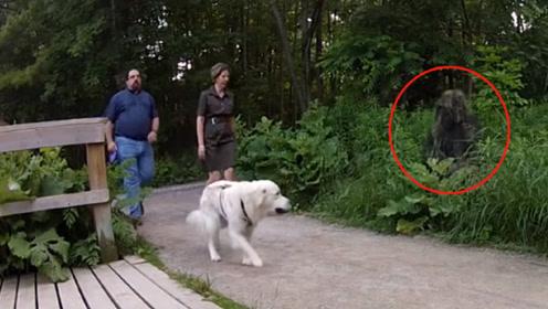 男子穿吉利服蹲草丛,结果来了条憨狗,下一秒忍住别笑