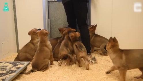 警犬队迎来9个新成员,变身奶爸的训导员小哥,满眼都是爱意啊