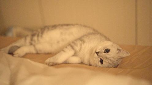 猫咪塔可:每到深夜你是不是也无聊如我?