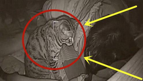 深夜监控拍下一幕!猫死死盯住主人头部,看的一身冷汗!
