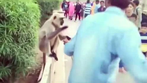 印度男子给猴子喂食,下一秒一耳光拍翻猴子,猴子当场就懵了