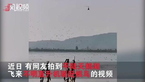 河南三门峡直升机驱赶白天鹅?初步判断:系直升机私自改变航线