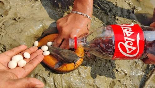 男孩用可乐和曼妥思当秘密武器,捉到一堆大家伙,老渔民看了都眼红!