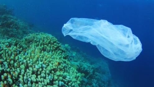 珊瑚竟然喜欢吃塑料垃圾?可悲可叹,人类正在改变海洋生态系统