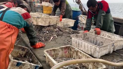 台风来之前捕捞三小时起网,遇到不少稀奇货,海里毛毛虫比陆地丑