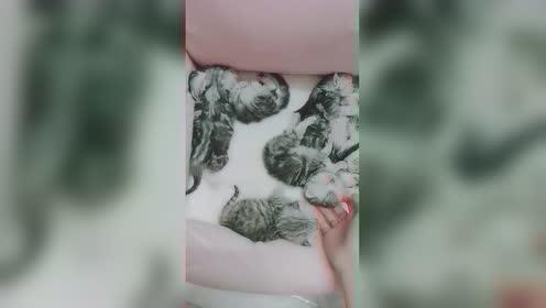 每天起床第一件事看看猫咪是不是7只
