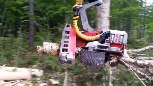 令人敬畏的木材加工机械!机械化操作太强大了