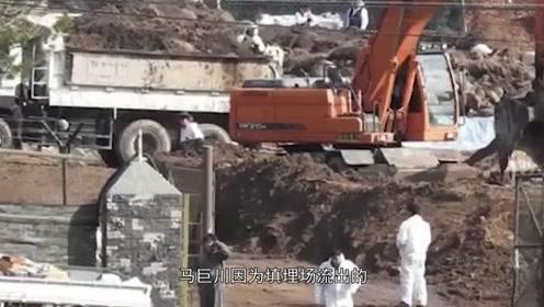 韩国4万头猪死尸堆积成山,江水被血染成红色或污染下游饮用水源