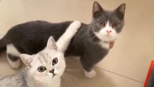 喵星人:这铲屎的指定有猫病,怕是没得救了!
