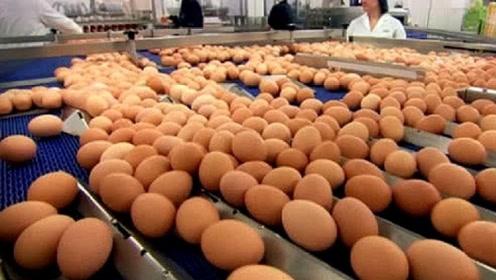 超市的鸡蛋是怎么生产的?实拍工厂生产鸡蛋过程,真相没那么简单