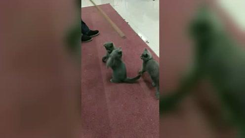 三只可爱的小猫咪