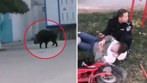 体型巨大野猪闯入居民区连伤多人 民警连开数枪将其击毙