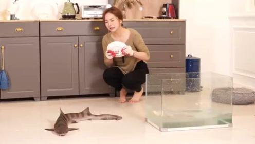 小姐姐想抓活鱼来吃,没想到被鱼吓得落花流水,网友:这鱼太凶狠了