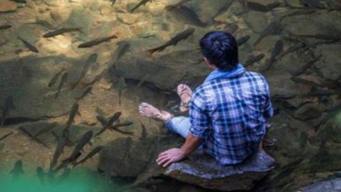 """泰国国家森林公园,黑鱼泛滥成灾,形成罕见""""鱼瀑布""""却没人敢吃"""