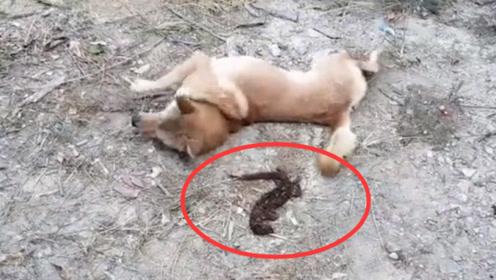 以为是老鼠,傻狗一口咬下去发现不对劲,下一秒瞬间傻眼