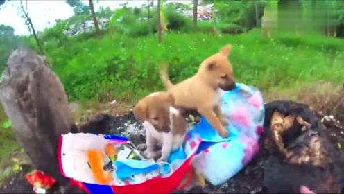 路边垃圾堆遇到两只流浪小狗,收养了