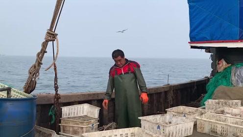大胖家渔船捕捞6小时,上百斤大货在船板上蹦,捡一桶海星送粉丝