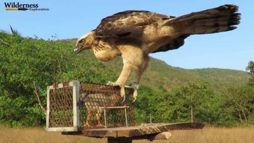 看小孩徒手抓老鹰,镜头全部都记录下来,这下真替它尴尬