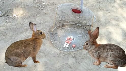 捕兔陷阱制作,你学会了吗?