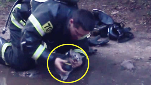 暖!实拍:消防员火场救出奄奄一息的小猫咪 跪地为它洗脸、输氧