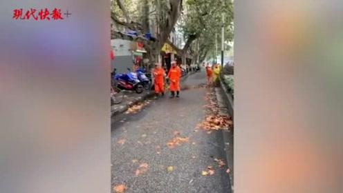 南京落下了几百吨落叶,累坏了他们