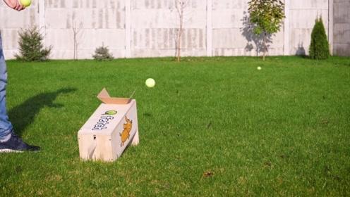 给狗狗DIY小球发射器,简单又好玩