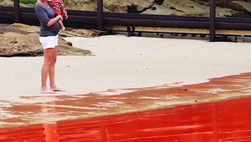 海洋里令人惊叹的奇观:大面积红色海洋,出现就会带来死亡