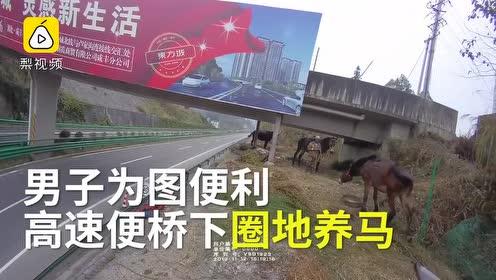 男子高速公路桥下圈地养马:7匹骡马