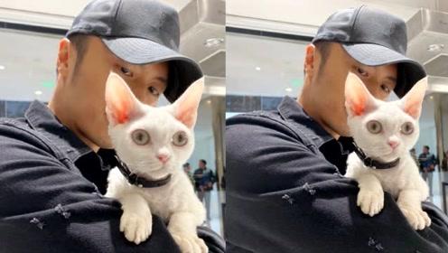 谢霆锋化身猫奴抱爱宠上班,网友吐槽:难道孩子还没有你的猫重要吗