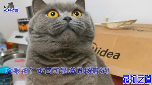 这对胖猫夫妻太霸道,谁跟它们抢玩具就打谁,绝育后的母猫竟胖成了公猫