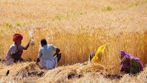 同样不够吃,为什么我国满世界买粮食,印度却向全球出口粮食!