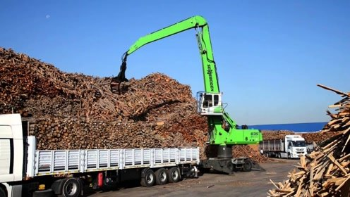 木材厂实拍,这里的圆木堆积如山,多到根本数不清
