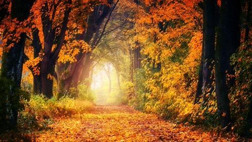 【科学嬉游记】生命——什么是森林栖息地