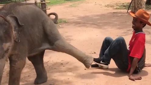 饲养员故意调戏小象,小象暴怒反击,结果让人哭笑不得!