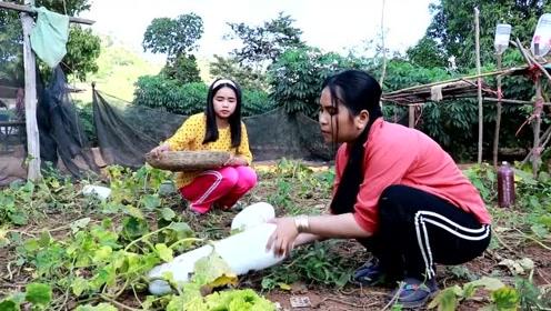 农村女子用冬瓜做糍粑,做法挺新鲜的,我是第一次见