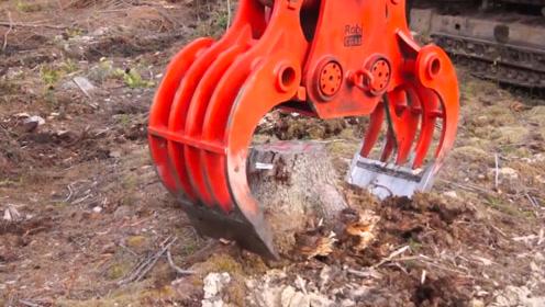 巨大的树桩是如何破碎处理的?看完后解开了我多年疑惑