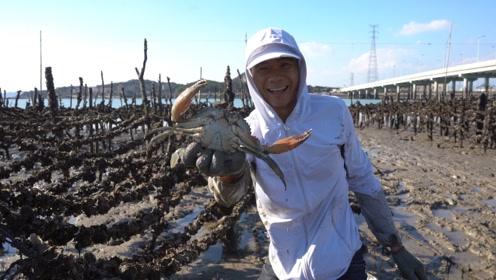 阿烽去海蛎田抓到几只大青蟹,阿鑫说奶茶西施想买,阿烽立马打折