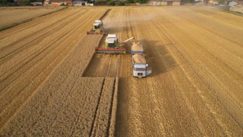 美国为什么粮食出口全球第一?看看他们的机械化水平,太牛了