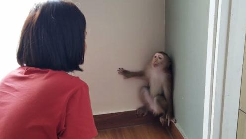 猴子闯祸,不满主人教训自己和主人顶嘴,主人竟吵不过一只猴子!