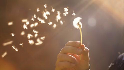 【科学嬉游记】生命——种子是怎么传播的?
